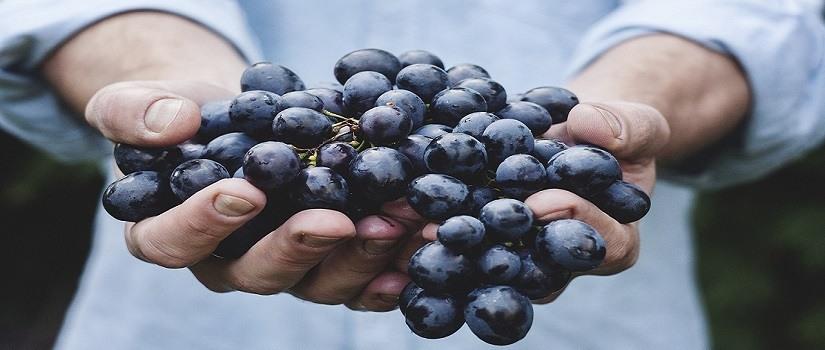 The 'Soul' Purpose of Fruit